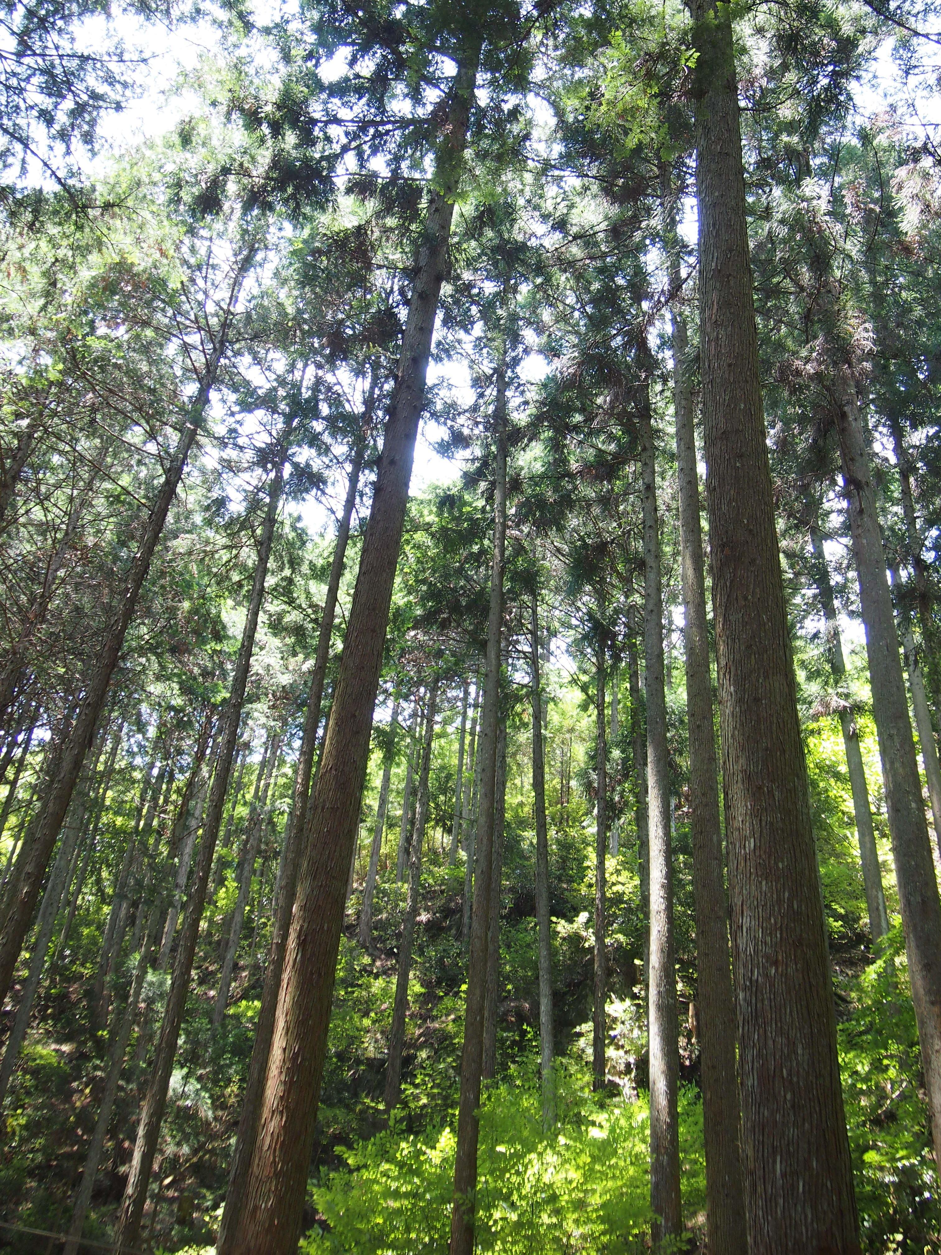 悠久の風景 吉野の道『吉野町森林セラピー』神仙峡 龍門の里コース
