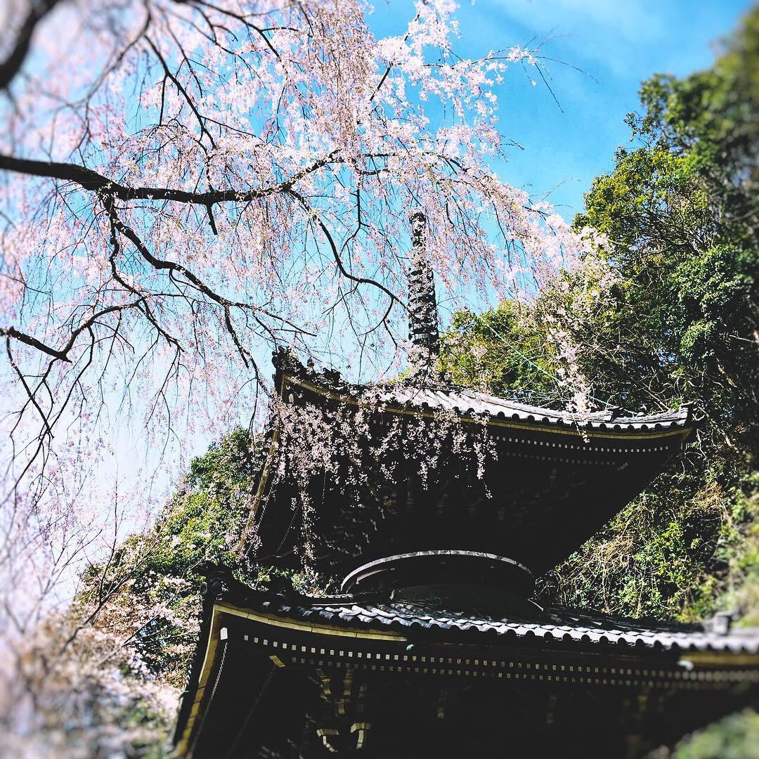 吉野山で終活を考える「お墓を建てない自然葬」~桜葬の如意輪寺・宝珠苑~