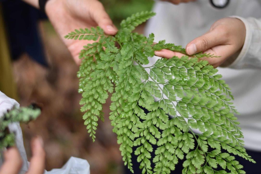 吉野山のさんぽ道「シダ植物の魅力」~シダ植物のアート観察会~
