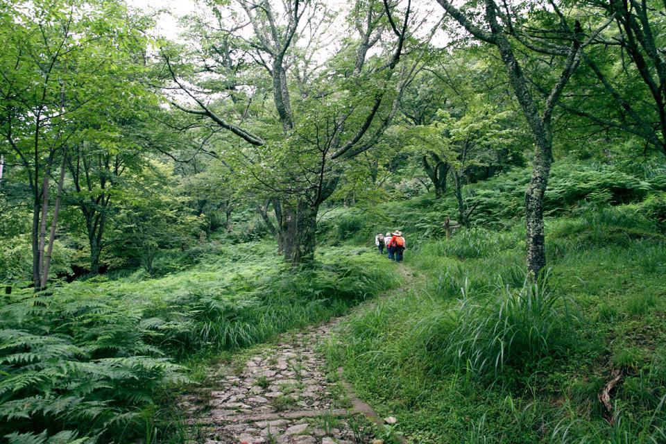 吉野町森林セラピー 悠久の風景 吉野の道 〜吉野・宮滝 万葉コース〜